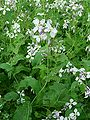 Beihai-flowers.jpg