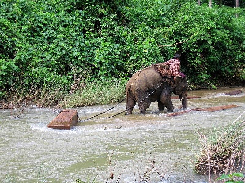 File:Bhamo-elefantes-d01.jpg