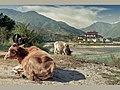 Bhutan - Pungthan Dechen Dzong, Punakha (6575730257).jpg