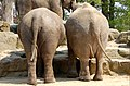Big butts (4065511128).jpg