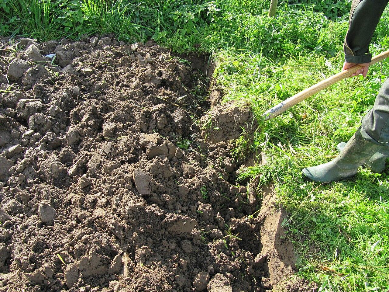 Ein staudenbeet anlegen schritt f r schritt planen for Boden umgraben