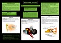 Biofyzika sluchu 2.0 poster.pdf