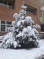 Bjno8ms after snow(2).jpg