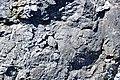 Black smoker rocks (sulfidic wad) (Helen Iron-Formation, Neoarchean, 2696-2749 Ma; Sir James Pit, Eleanor Iron Range, Ontario, Canada) 9 (48069972497).jpg