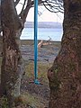 Blue Swing and Trees - geograph.org.uk - 761105.jpg