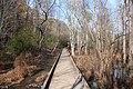 Boardwalk on the Cochran Shoals trail, Cobb County Nov 2017.jpg