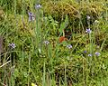 Bog (Deepsyke Forest) - Flickr - S. Rae.jpg