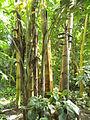 Bogarub-bambus.jpg