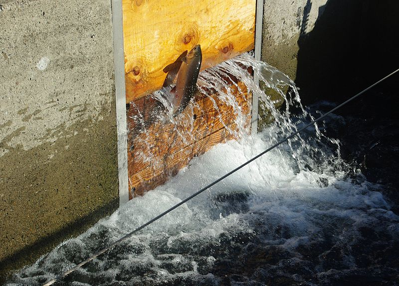 file bonneville fish hatchery fish chute 6 oregon jpg