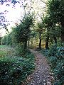 Bornheim-Roesberg-Burg-PA300078.JPG