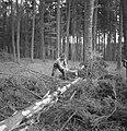 Bosbewerking, arbeiders, boomstammen, gereedschappen, Bestanddeelnr 251-7931.jpg