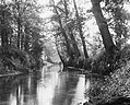 Bosbouw, bos en natuurschoon, Bestanddeelnr 194-0577.jpg