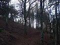 Bosco sul monte Camurcina - panoramio (2).jpg
