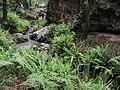 Bosque Húmedo - panoramio.jpg