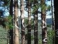 Bosque de Oma (19)- El ojo.JPG