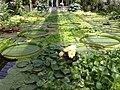 Botanischer Garten 24.07.2012 - panoramio (3).jpg