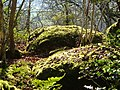 Boulders in Shaptor Wood - geograph.org.uk - 127100.jpg
