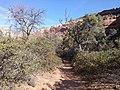 Boynton Canyon Trail, Sedona, Arizona - panoramio (37).jpg