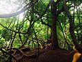 Branches ananthagiri.jpg