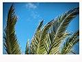 Breezy Torquay (12374896633).jpg