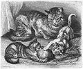 Brehms Het Leven der Dieren Zoogdieren Orde 4 Huiskat (Felis maniculata domestica).jpg