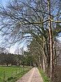 Bridleway, Brandesburton - geograph.org.uk - 385992.jpg
