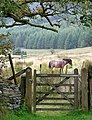 Bridleway gate at Dolgoch, Ceredigion - geograph.org.uk - 1518125.jpg