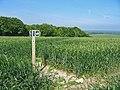 Bridleway junction in wheatfield Pentridge Dorset - geograph.org.uk - 183090.jpg