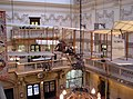Bristol museum main hall and boxkite arp.jpg