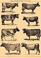 Brockhaus and Efron Encyclopedic Dictionary b59 264-1.jpg