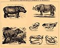 Brockhaus and Efron Encyclopedic Dictionary b5 256-0.jpg