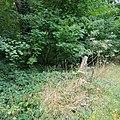 Brockley & Ladywell Cemeteries 20170905 102519 (46914281324).jpg