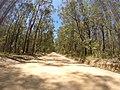 Brooman NSW 2538, Australia - panoramio (148).jpg