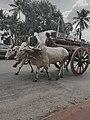 Bullock cart kerala.jpg