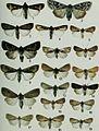 Butterflies and moths of Newfoundland and Labrador - the macrolepidoptera (1980) (20323017448).jpg