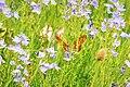 Butterfly field (45530871822).jpg