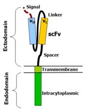 Image result for car receptor