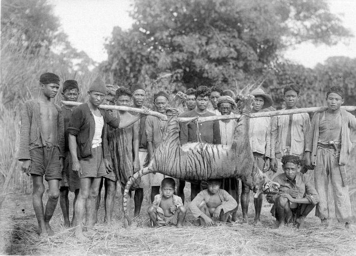 COLLECTIE TROPENMUSEUM Een groep mannen en kinderen poseert bij een pas geschoten tijger te Malingping in Bantam West-Java TMnr 10006636