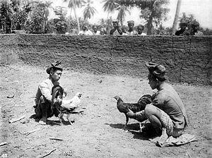 Cockfighting at Bangkang