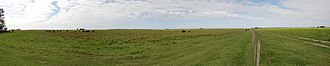 Humid Pampas - Grazing land in La Pampa Province