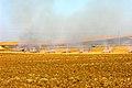 Campos de algodón en Écija.jpg