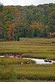 Canoe, Creek, and Colors (6303334700).jpg