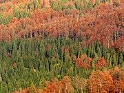 Осенний смешанный лес (север Италии)