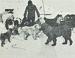 Cape-Adare-1899-Carsten-Borchgrevink-Camp-Ridley-Dogs.jpg