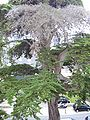 Carnac 2008 PD 14.JPG