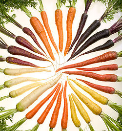 Carrots of many colors cutout.jpg