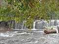 Cascade de la rivière sacrée (Phnom Kulen) (6825025205).jpg