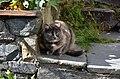 Cat in old town, Bergen (2) (36348266371).jpg