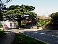 Caterham cedar tree - geograph-2373406.jpg