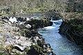 Cenarth Falls, River Teifi - geograph.org.uk - 397102.jpg